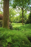Landscape image of beautiful vibrant lush green forest woodland Stock Photo