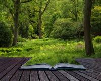 Landscape image of beautiful vibrant lush green forest woodland Royalty Free Stock Photos