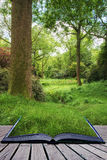 Landscape image of beautiful vibrant lush green forest woodland Stock Photography