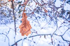 Dried maple leaf. Landscape with the image of dried maple leaf Royalty Free Stock Photography