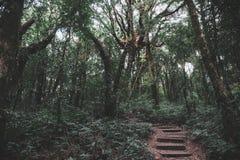 Greenery rainforest and the wooden walk way. Landscape image of greenery rainforest and the wooden walk way Stock Image