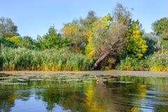 Landscape image of a large river shore vegetation Royalty Free Stock Images