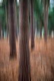 Landscape image pine forest blur artistic effect Stock Images