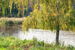 Landscape with the image of the river and the surrounding nature Royalty Free Stock Photos