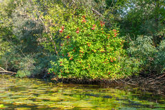 Landscape image of a small river reedy and old trees Stock Photos