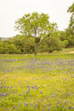 Springtime In Texas Royalty Free Stock Images