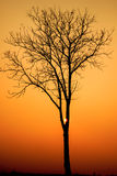 Landscape image with trees silhouette at sunset Stock Image