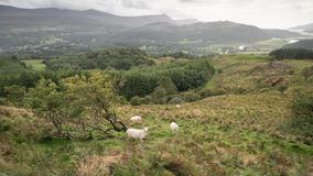 Landscape image of view from Precipice Walk in Snowdonia overlooking Barmouth and Coed-y-Brenin forest during rainy afternoon in. Beautiful landscape image of stock images