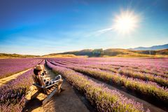 Landscape image of a young tourist sits and enjoying the sunshine at Lavender Farm stock photo