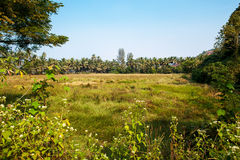 Landscape in India Stock Photography
