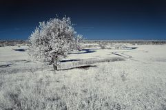 Landscape in the infrared Royalty Free Stock Image
