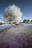 Landscape  in infrared of lake in English countryside in Summer Royalty Free Stock Images