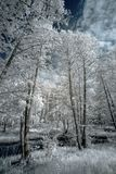 Landscape in infrared light Stock Photography