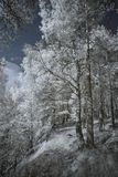 Landscape in infrared light Royalty Free Stock Image