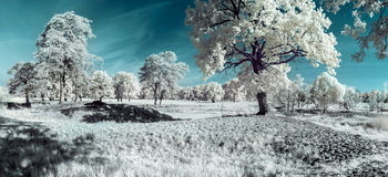 Landscape in the infrared Stock Images