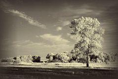 Landscape with infrared tree. Beautiful tree photographed with an infrared filter on camera at the sunset Stock Photo