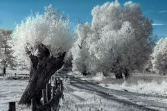 Landscape in the infrared Royalty Free Stock Photography
