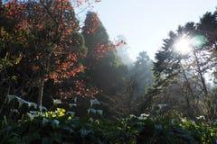 Beautiful scenic landscape inside Taiwan's Alishan National Scenic Area. royalty free stock photo