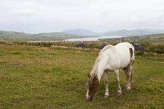 Landscape of ireland Royalty Free Stock Photo