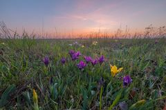Landscape with iris stock image