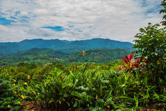 The landscape on the island of Borneo. Flowers and view of the mountains in the horizon. Sabah, Malaysia. Stock Photography