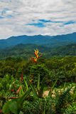 The landscape on the island of Borneo. Flowers and view of the mountains in the horizon. Sabah, Malaysia. Royalty Free Stock Photos