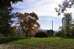 Landscape, Italy, Włochy, krajobraz, góry, drzewo, jesień, sunny, day, Stock Image