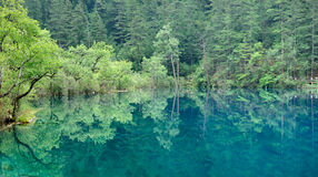Landscape of Jiuzhaigou Royalty Free Stock Images