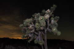 Landscape in Joshua Tree National Park Stock Photo