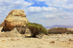 Landscape in the Judean Desert Stock Photos