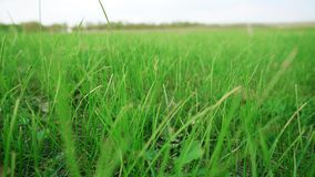 Landscape of juicy green grass and blue sky.  stock video