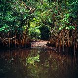 Jungle in gabon. Landscape of jungle in gabon Royalty Free Stock Photography