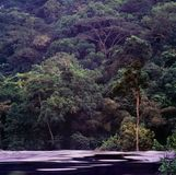 Jungle in gabon. Landscape of jungle in gabon Royalty Free Stock Image