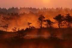 Landscape of Kakerdaja Bog Stock Photos