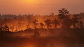 Landscape of Kakerdaja Bog Royalty Free Stock Photo