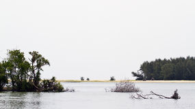Landscape in Kallady estuary, Sri Lanka Royalty Free Stock Image
