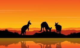Landscape kangaroo on the river silhouette Stock Photo