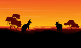 Landscape kangaroo silhouette at the sunset Stock Photography