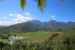 Landscape of Kauai with Taro Fields Royalty Free Stock Photo