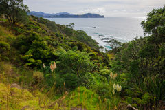 Landscape in Kauri Stock Photography