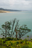 Landscape in Kauri Royalty Free Stock Photos