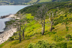 Landscape in Kauri Stock Photos