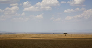 Landscape in Kenya Royalty Free Stock Photography