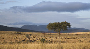 Landscape in Kenya Royalty Free Stock Photos