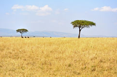 Landscape in Kenya Royalty Free Stock Image
