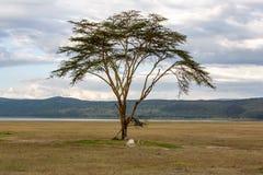 Landscape Kenya Stock Photo