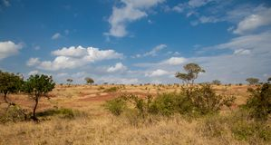 Landscape in Kenya, grassland with some trees Stock Photos