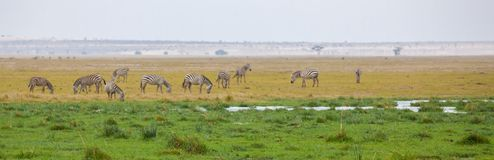 Landscape of Kenya with herds of animal. And water holes Royalty Free Stock Image