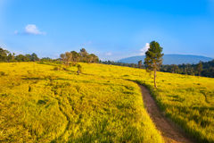 Landscape of Khao Yai national park Royalty Free Stock Images