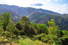The landscape on Koh Samui Royalty Free Stock Image